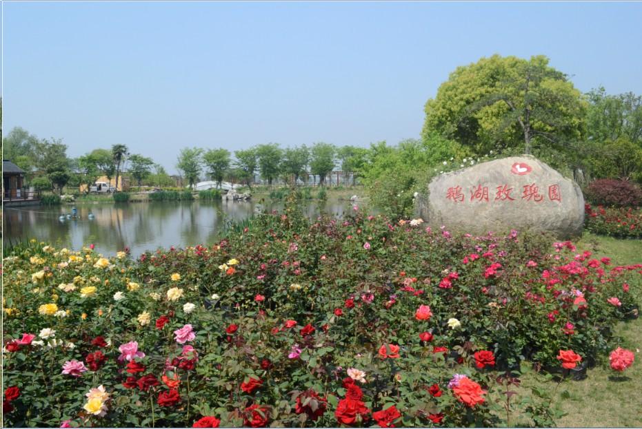 鹅湖玫瑰园